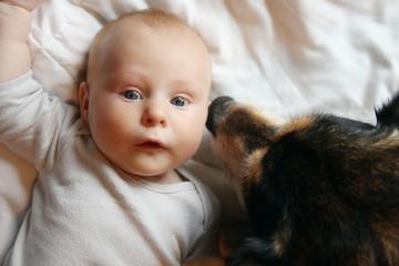 Pet German Shepherd Dog Kissing Newborn Baby