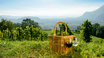 Aluminium Prints Picnic Basket with bottles of wine in the vineyards
