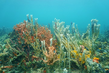 Diversity of sea sponges on the ocean floor