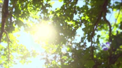 Fotoväggar - Summer nature. Sun shining through green leaves