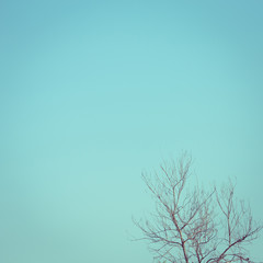 big dry tree white sky background, image used filter vintage