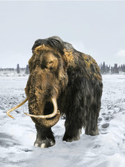 Woolly Mammoth/ice age fauna in natural conditions.