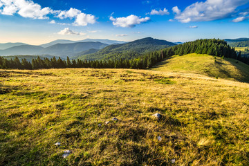 meadow on a hillside near forest at sunrise