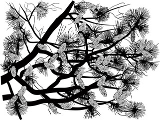 black tree branch with cones