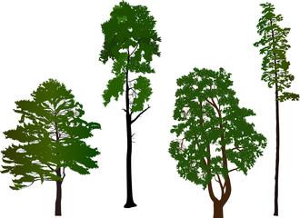 four evergreen trees on white background