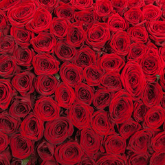 Red roses background natural texture of love