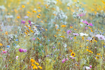 Summer Wildflower Meadow Background