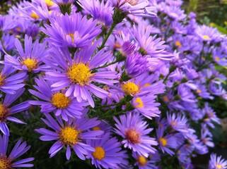 Fleur jardin bio