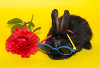 Buffo coniglio nero con occhiali da sole e rosa rossa