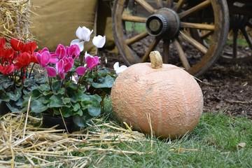 Herbstdekoration Kürbis Alpenveilchen Wagenrad