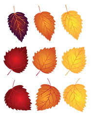 Birch Leaves in Fall Colors Vector Illustration