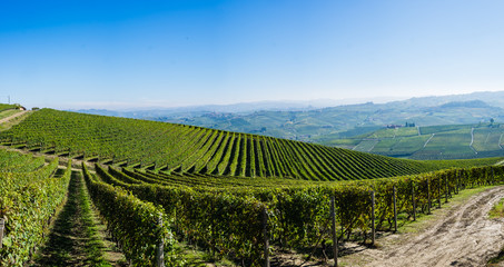 Wall Mural - Panoramic view of the Langhe vineyards and hills in autumn