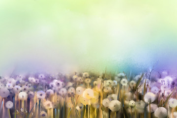 Abstract oil painting white flowers field in soft color. Oil paintings white dandelion flower in the meadows. Spring floral seasonal nature with blue -green in background.