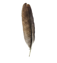 Feather pen isolated on white background