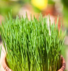 Fine grown chives at market