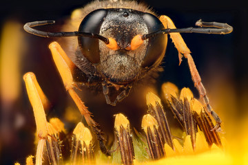 Extreme magnification - Wasp on a flower