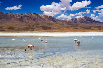 Flamingos in a lagoon in the Bolivian Altiplano