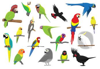 Various Parrots Cartoon Vector Illustration