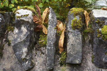 Not a Summer Shot. A close up photo of a detail of an old stone bridge littered with autumn leaves and moss.