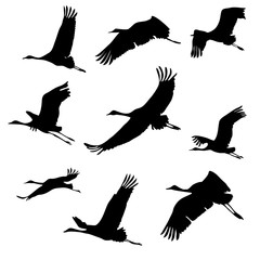 silhouettes of flying birds. cranes