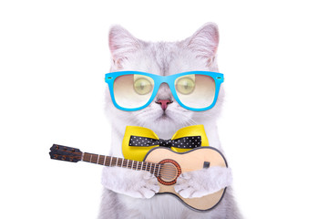 Smart beautiful british cat with a guitar. Funny animals. Trendy cat dressed in beautiful clothes