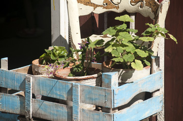 Blue wooden crate on chair with potted flowers