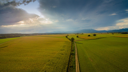 Felder bei Sonnenuntergang Vogesen