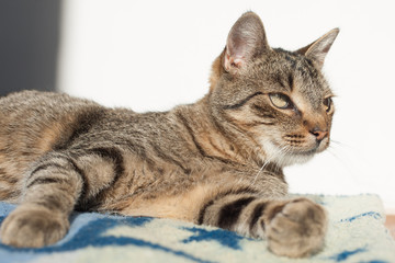 portrait of a cat , Cute cat relaxes and dreams