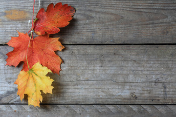 Herbstliches1