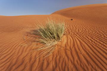 Grass in the Rub Al Khali Desert
