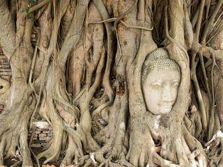 Buddha's head in tree root at Ayutthaya Thailand