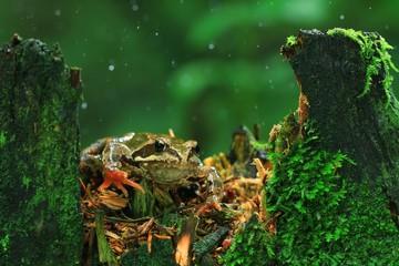 Frog close-up portrait