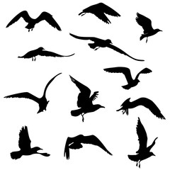 silhouettes of seagulls flying