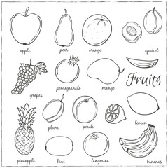 Hand drawn doodle Fruits with name. Vector illustration