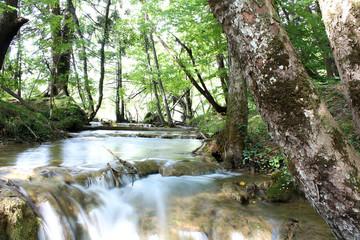 Arroyo en el bosque del Parque Natural de los Lagos de Plitvice