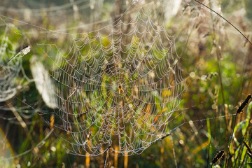 Cobwebs in a hazy field in autumn at sunrise