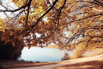 Lake Forest autumn landscape nature