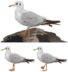 Set of seagulls isolated on white background