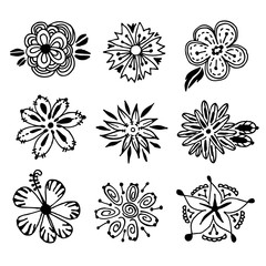 vector hand drawn flower. doodle
