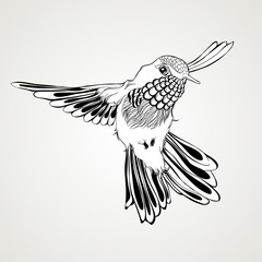 Hand drawn flying humming bird vintage style.