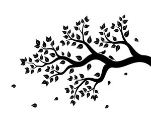 Vector illustration of tree branch with leaves in black color on white background