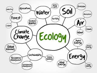 Ecology mind map flowchart concept for presentations and reports
