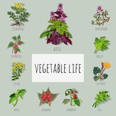 A set of useful varieties of herbs