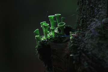 mold fungi macro little family
