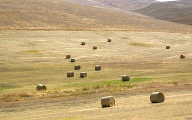 Field of Rolls