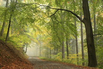 Photo Stands Road in forest Forest trail in foggy autumn morning