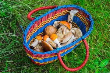 Грибы лежат в корзине
