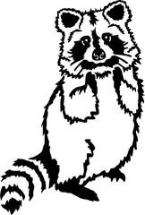 Cute raccoon standing