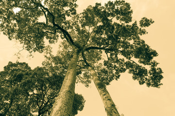 tree, old  picture  style