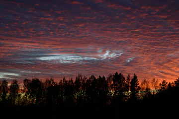Northern Forest Silhouette Against Dramatic Sunset